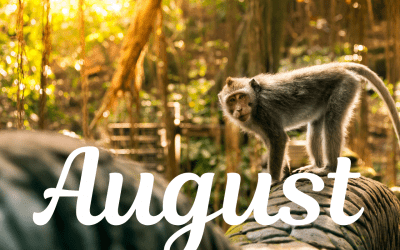 August – mesiac Opice