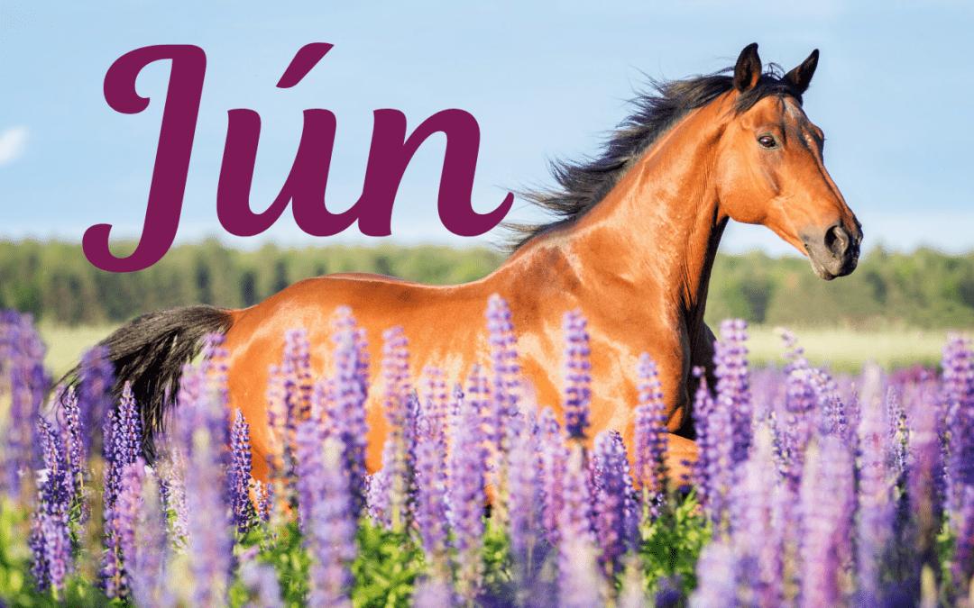 Jún – povezie nás Kôň