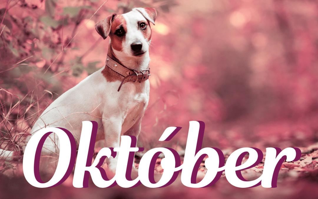 Október – mesiac Psa